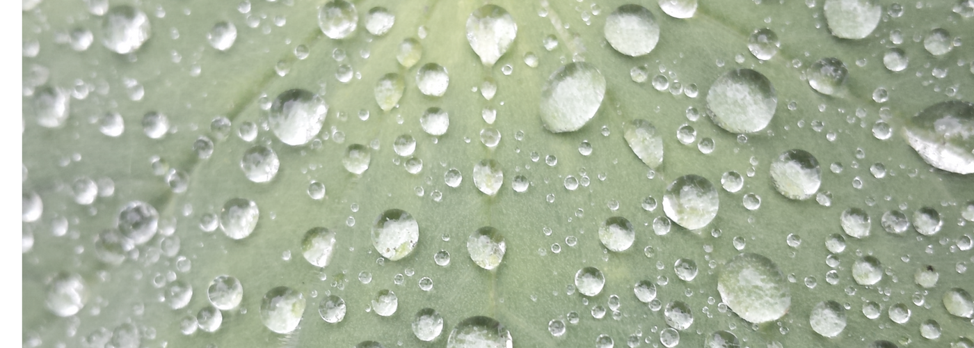 leaf with hydrating water dropletts