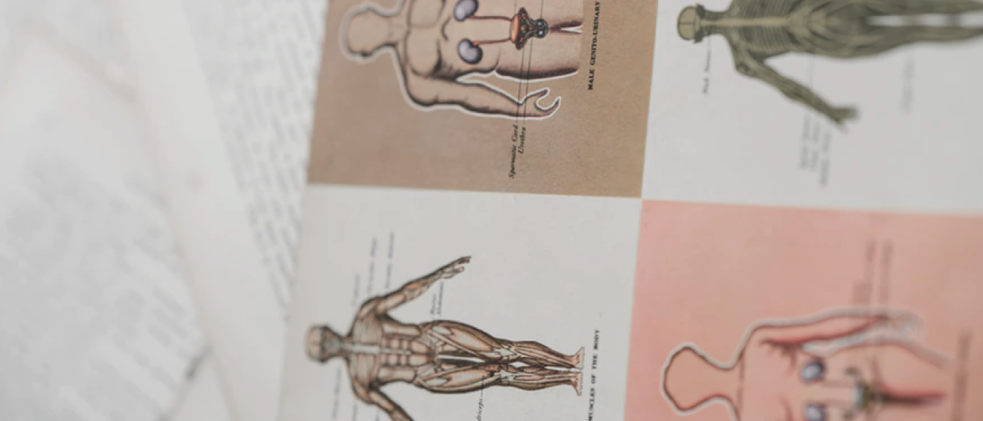 book of drawings body anatomy